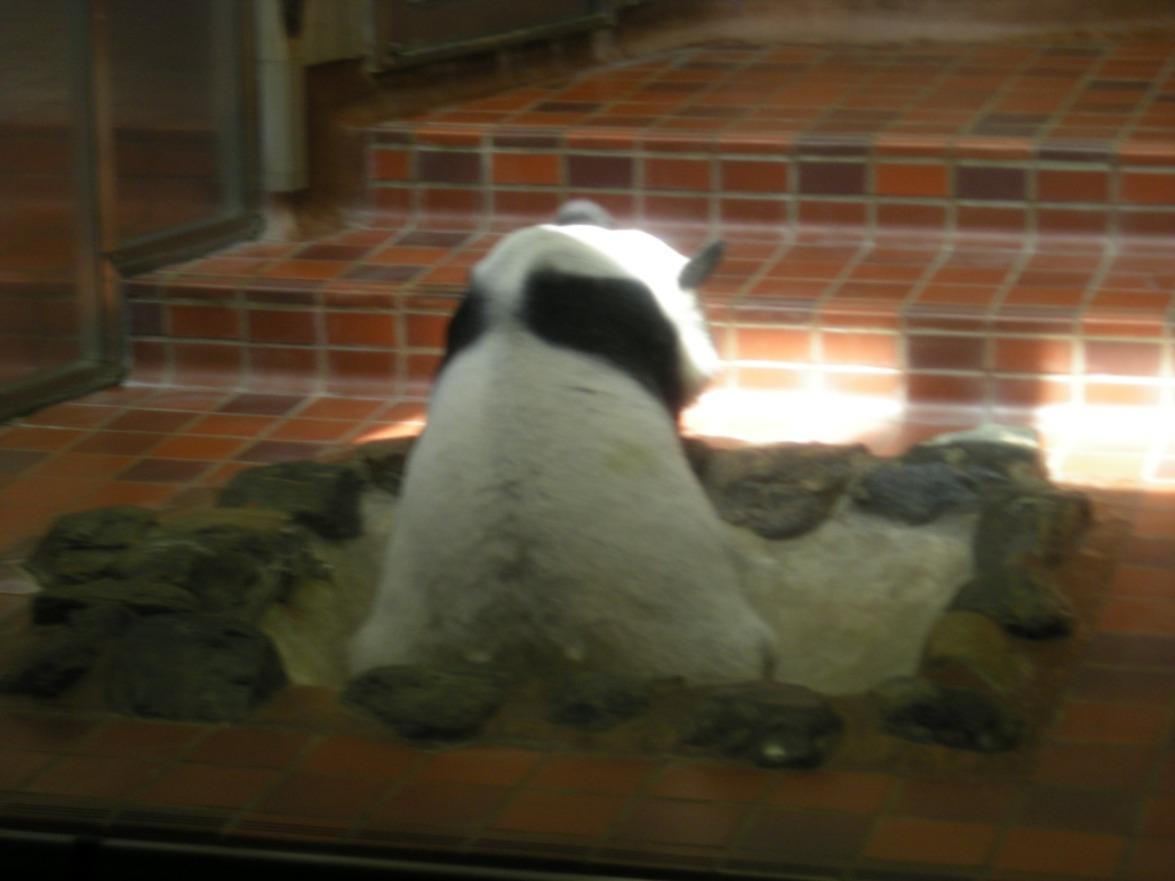080429上野動物園パンダ.jpg